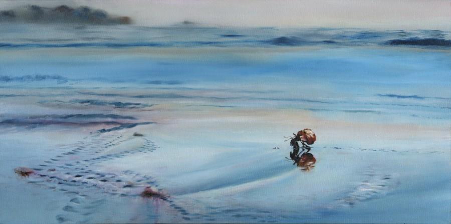 hermit crab1